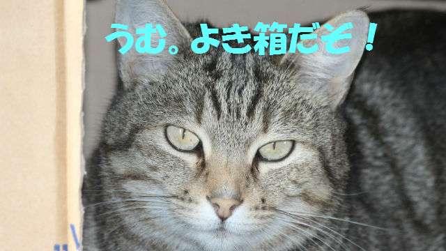「猫の十戒」が「犬の十戒」と比べて上から目線でおもしろい | ANIMALive
