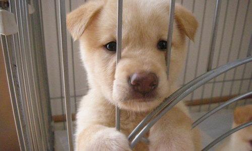 雑種犬の魅力