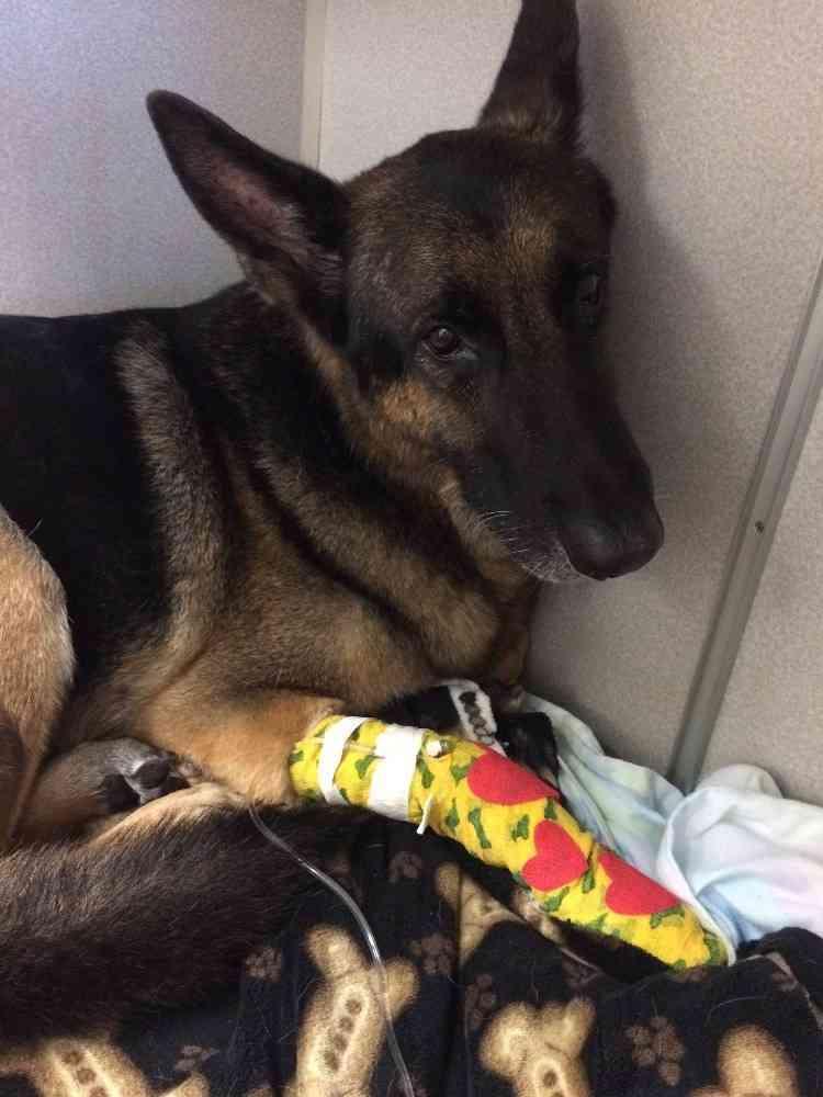 勇敢なペット犬、炎に包まれた家の中へ 子供2人を救う(米)