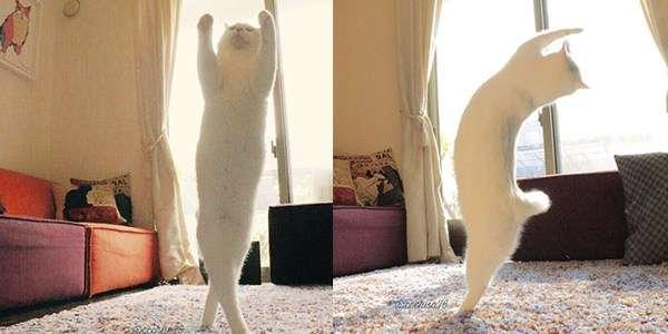 【速報】うちの猫がバレエを踊り始めた | netgeek