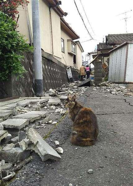 【熊本地震】「人の水もないのに犬に飲ませるのか?」ペット同伴避難でトラブル相次ぐ