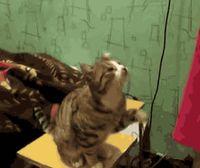 画像 : これはかわいい!おもしろかわいい猫gifアニメ特集 - NAVER まとめ
