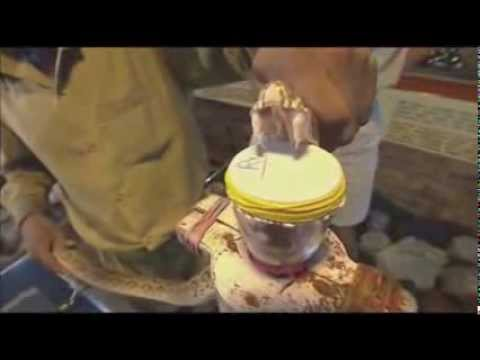 ヘビに噛まれたら人の血液はこうなる - YouTube