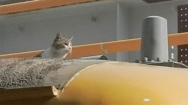 猫が電車の上に!19分遅れも「これは怒れない」 | ANIMALive