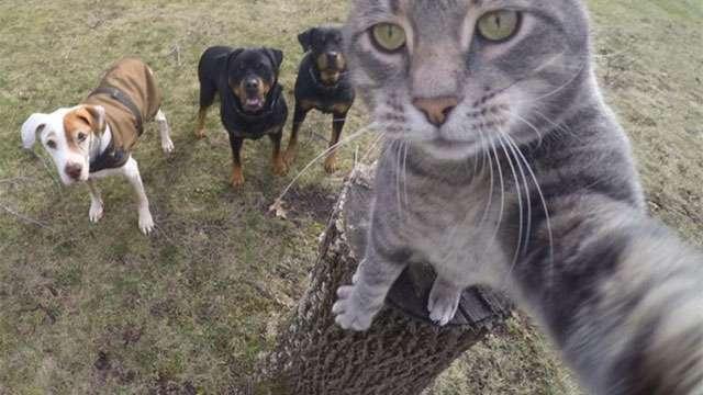 猫が自撮りをする時代に!?いろんな動物とハイチーズ! | ANIMALive