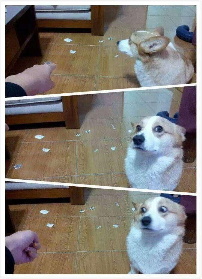 何かやらかしてしまった時の犬の表情の数々をご覧くださいw