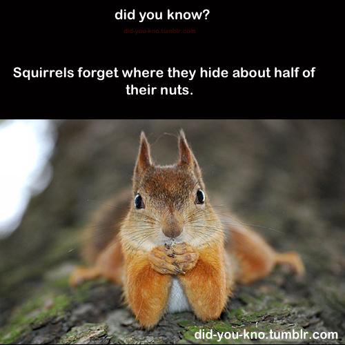 賢そうに見える動物の画像トピ