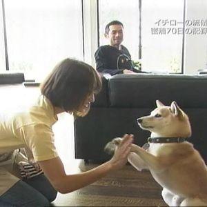 犬とネコ、飼うならどっち?