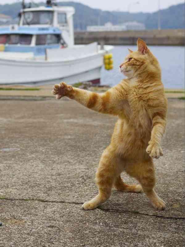 【画像】ジョジョ立ちするネコ現るw強者感がハンパないww