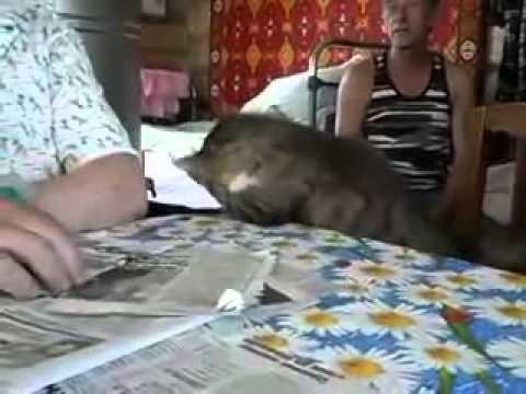 Погладь кота Pat the cat - YouTube