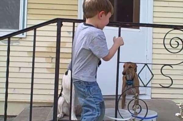 鉄柵に頭がハマって抜けない男の子のまさかのオチ