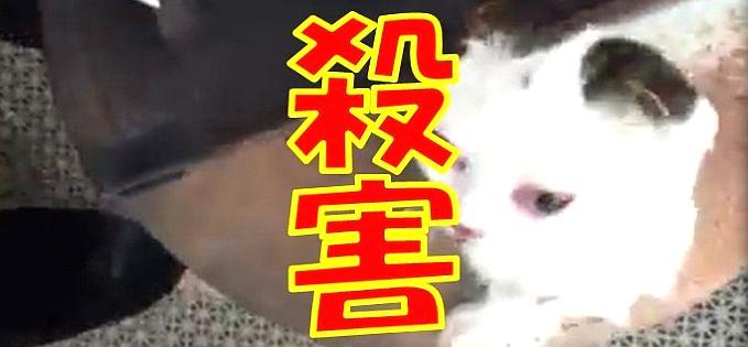飼い猫に暴行して焼却、殺害する動画を公開した女が炎上!その動機と現状は | 探偵Watch(探偵ウォッチ)