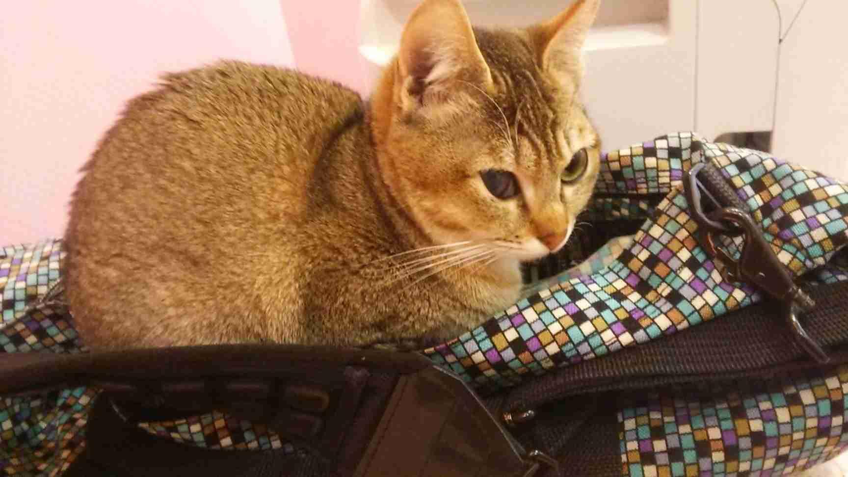 クチコミ : 猫カフェ ねこのて [東京都墨田区江東橋/猫カフェ] - Yahoo!ロコ