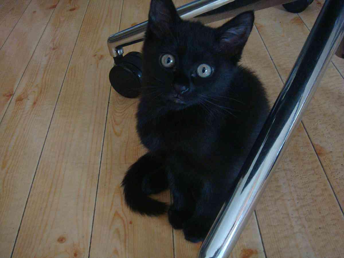 捨て猫がグルメ黒猫になったブログ!