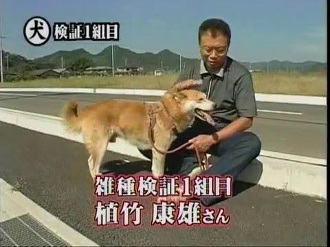 トリビアの種「散歩中、主人が謎の秘密組織に車で連れ去られた時、アジトまで助けにくる雑種犬は100匹中???匹」 - YouTube