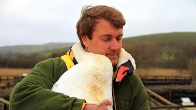 白鳥が首に巻きつきハグ「ありがとう」と感謝の気持ちを表す。 | ANIMALive