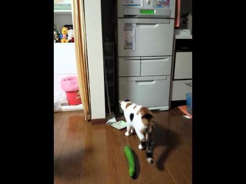 きゅうりにびっくりする猫 - YouTube