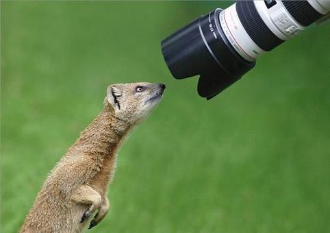動物が自撮りしてる感じの画像