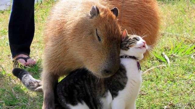 カピバラさんと仲良し動物たち「見ているだけで平和を感じる」癒し画像8枚 | ANIMALive