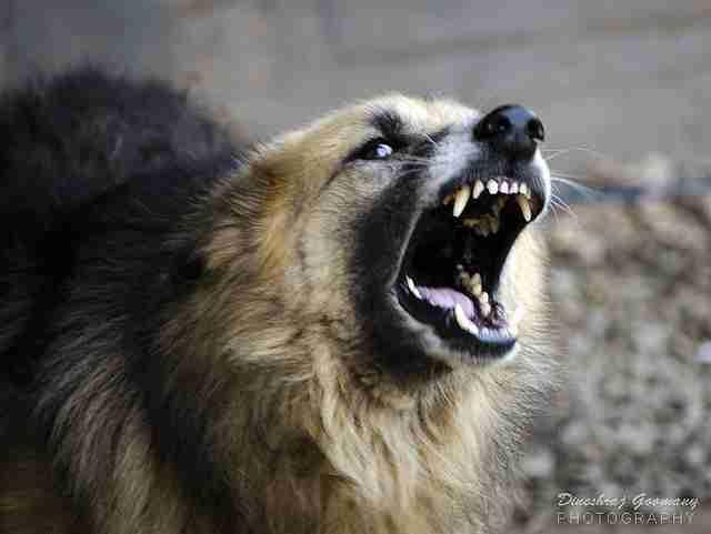 「お隣がペットショップの犬置き場に。50頭以上が一斉に吠える...なんとかしたい」(関西地方・50代女性) - ライブドアニュース