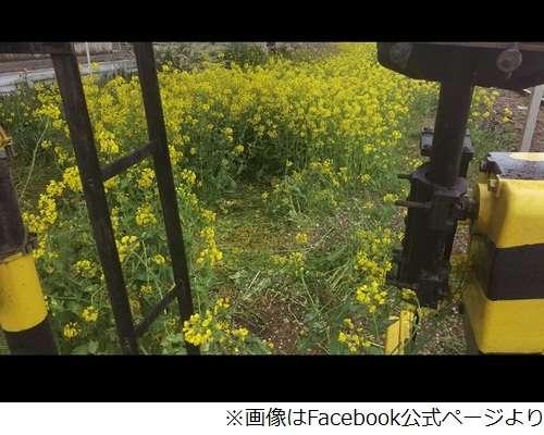 心ない「撮り鉄」来ないで 真岡鉄道が異例の警告