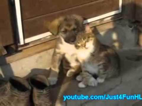 Kitten And Puppy Fall Asleep Together - YouTube