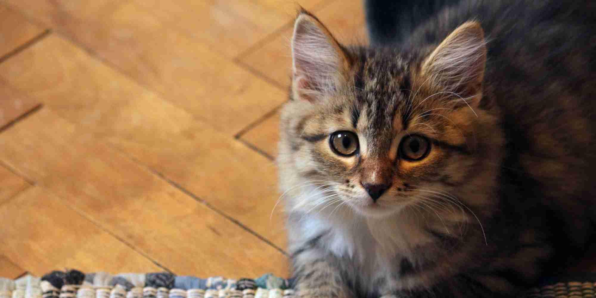 猫を飼うことと統合失調症は関係がある? (調査結果)