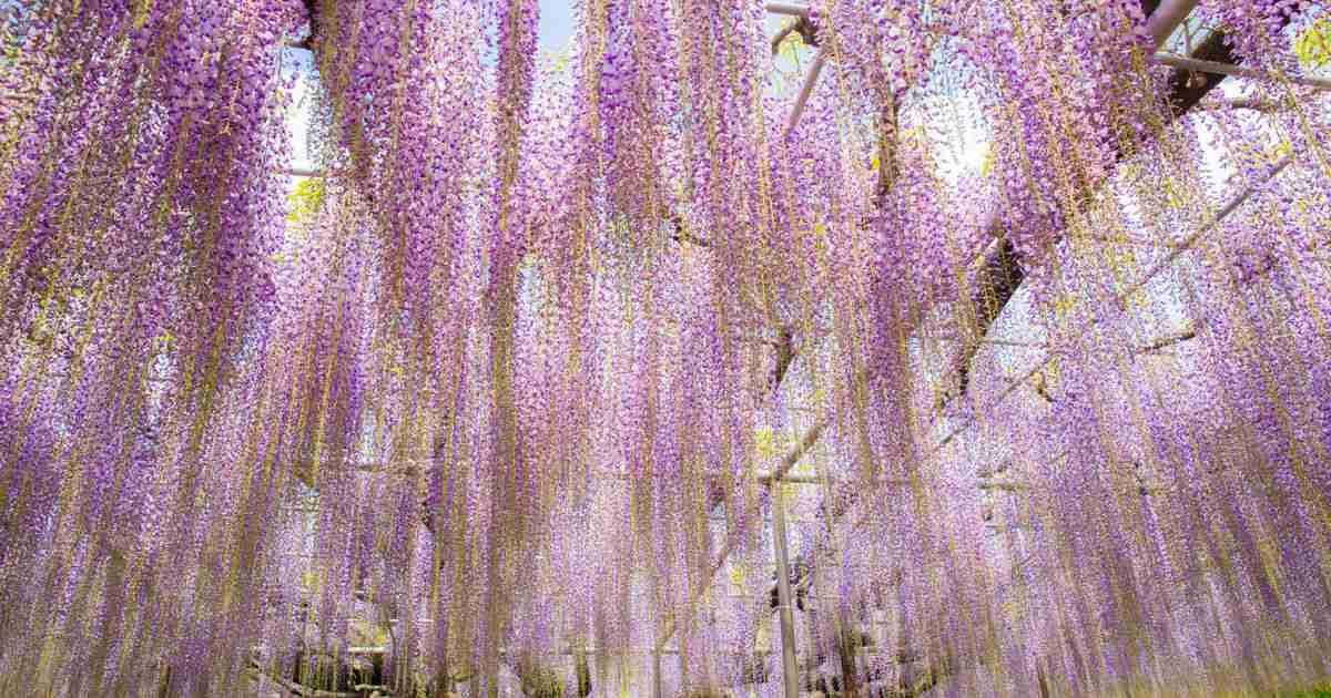 栃木観光でおすすめしたい50選まとめ!栃木の見どころをご紹介! - Find Travel