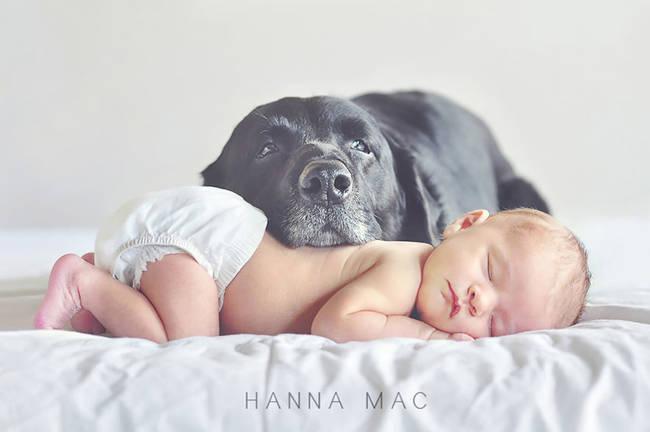生後3日の赤ちゃん、くしゃみに驚いた飼い犬に噛み殺される(米)