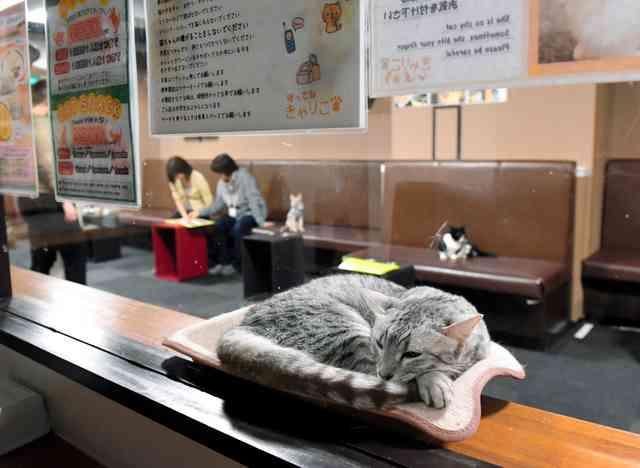 猫カフェ、午後10時まで営業OK 業界「猫は夜行性」:朝日新聞デジタル