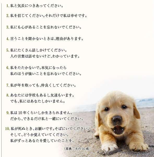 小型犬飼ってる方!!