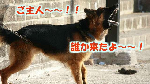 災害時に飼い犬を守るための必要なしつけとは!