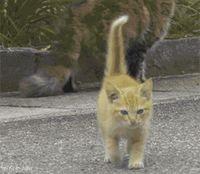 相手して : ネコのGIF画像がおもしろすぎるwww - NAVER まとめ