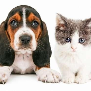 ペット猫の飼育数、激減の犬を逆転間近?手間のかからなさや費用安も原因か   ビジネスジャーナル