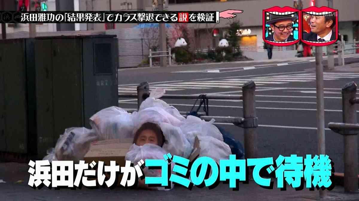 浜田雅功の「結果発表」でカラス撃退できる説がおもしろすぎ!