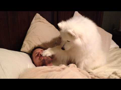 Lexi Wakes Dad UP - YouTube