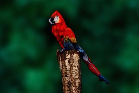 【衝撃の事実】この鳥の正体が人間だなんて…信じられますかーッ!? | Pouch[ポーチ]