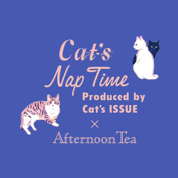 Cat's Nap Time|Afternoon Tea