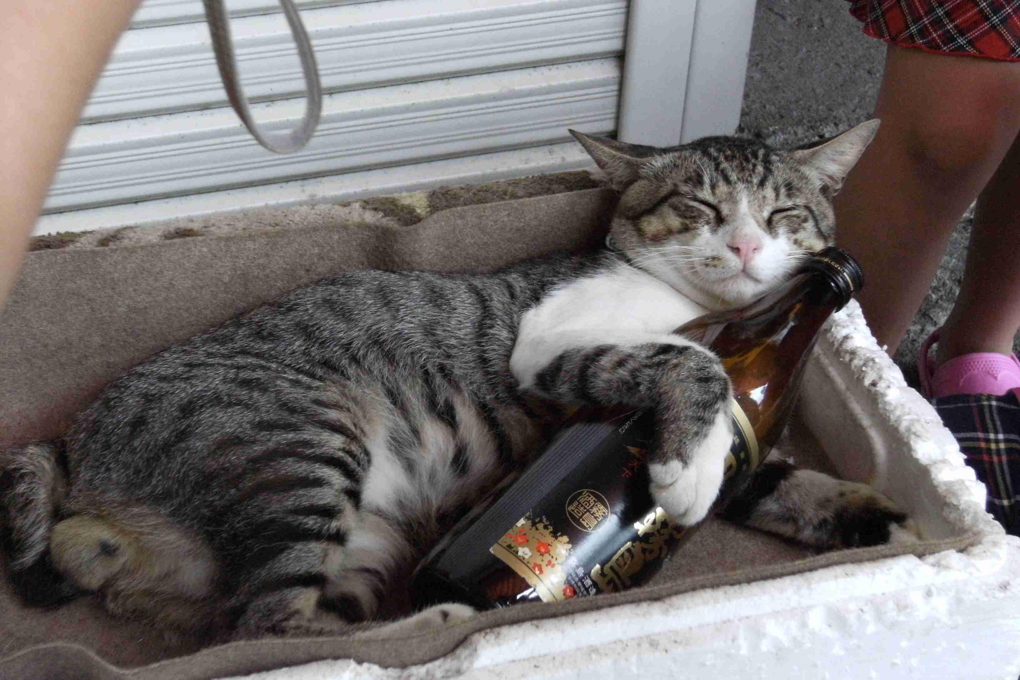 酔っ払ったらどうなりますか?