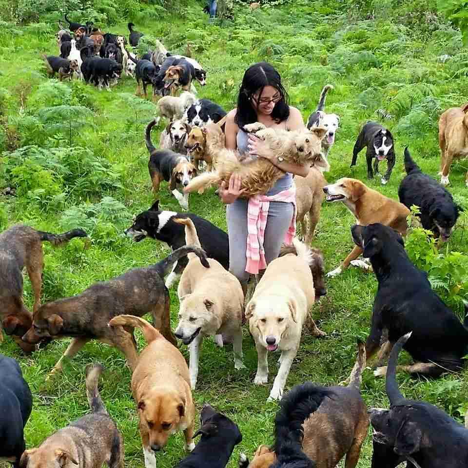 900匹以上の新種の犬がお出迎え「犬の楽園」がコスタリカに! | ANIMALive