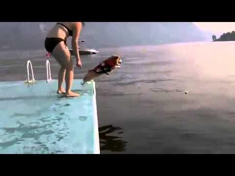 面白すぎる!コーギーが海へダイブする瞬間!!☆ - YouTube