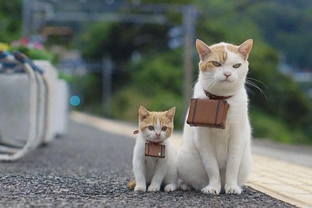 JR広島駅 電車の上に「猫がいる」 遅れも「怒れない」