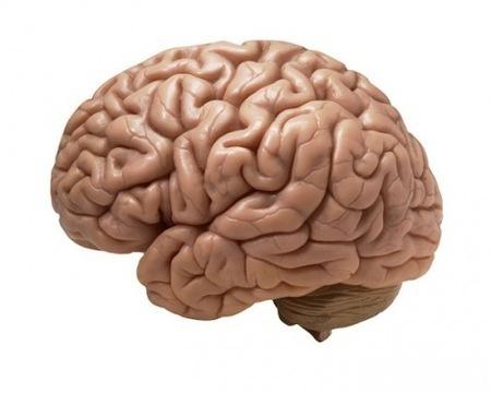 人をけなしたり批判するのが好きな「皮肉屋」は 脳に損傷をうけ 認知症になるリスクが高い。 : 伽羅の「美的生活を貫く」