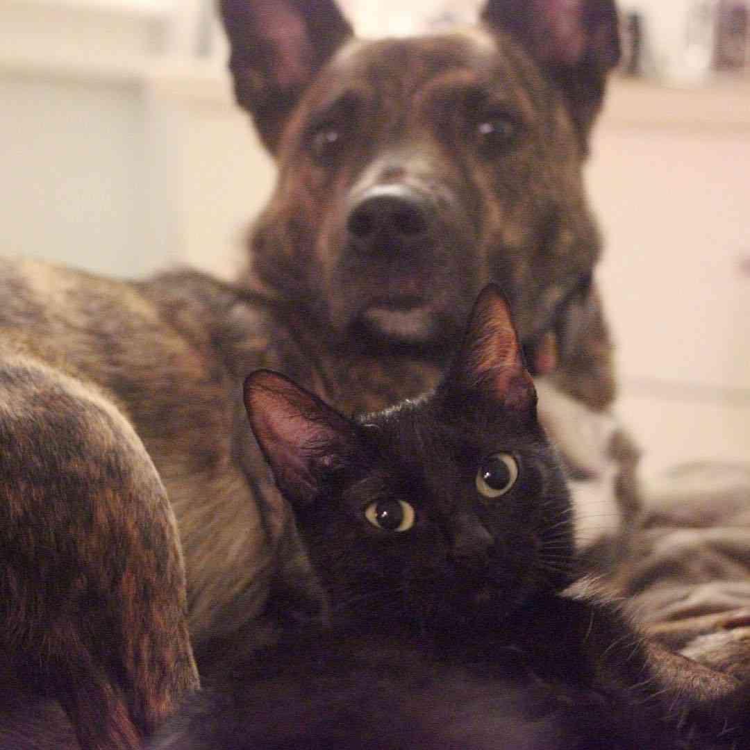ロマンスが止まらない。深い愛情で結ばれた犬とネズミの9か月後