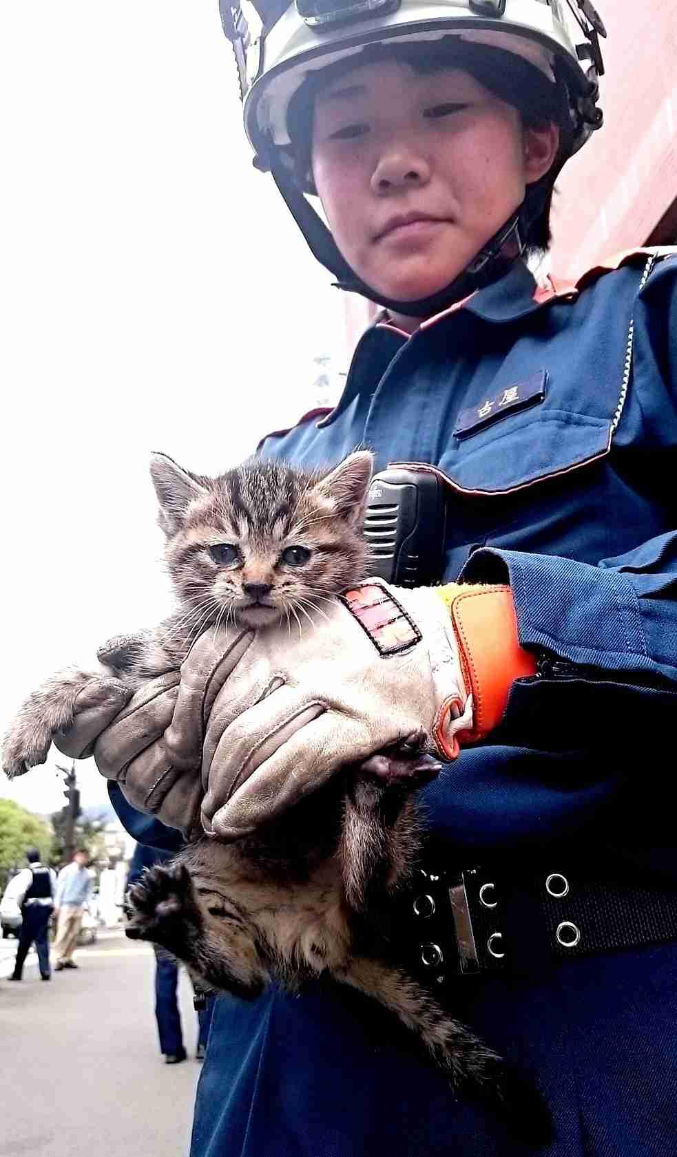 <子猫>ビルのすき間で「ニャー」救出 飼い主探しへ (毎日新聞) - Yahoo!ニュース