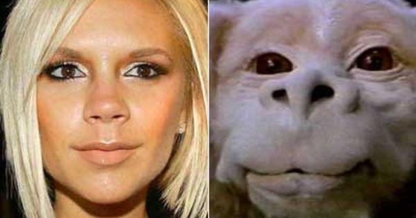 動物に似てると言われる人
