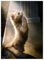 犬の十戒・猫の十戒【感動する話】 - NAVER まとめ