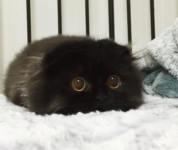 実在していた!?まっくろくろすけの生存が確認される。わりと猫だけど。 : カラパイア