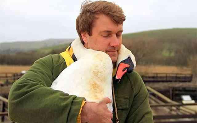 保護された白鳥 献身的な介護をしてくれた男性に親愛のハグ