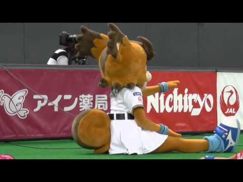 「しっぽが デカくて 寝れない」と申告するポリーさん@札幌ドーム 2014.08.02 - YouTube
